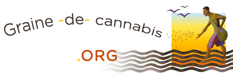 Graine de cannabis.org