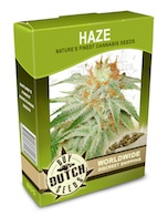 haze-cannabis-seeds