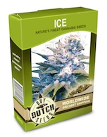 ice-cannabis-seeds