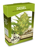 nyc-diesel-cannabis-seeds