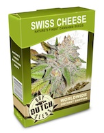 swiss-cheese-cannabis-seeds