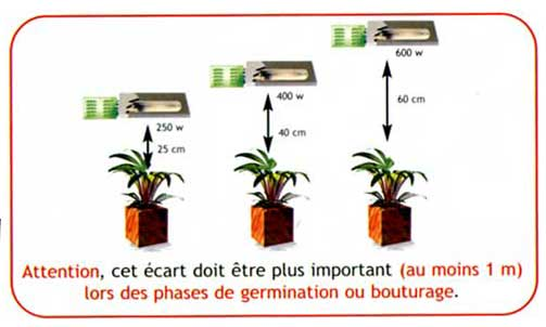 Distance lampe plante for Planter du cannabis en interieur