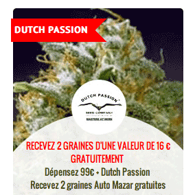 promo sur les graines Dutch Passion