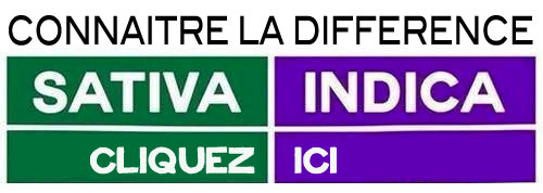 difference sativa et indica
